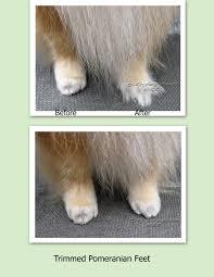 pet grooming the good the bad u0026 the furry tuesday u0027s tip 21