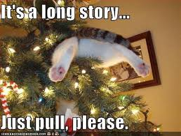 Christmas Cat Memes - long story cat in a christmas tree janet carr