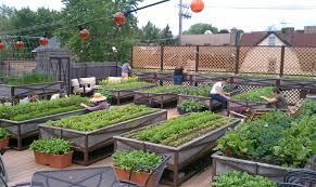 roof garden plants rooftop vegetable garden ideas video and photos madlonsbigbear com
