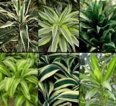 plante d駱olluante chambre plante anti pollution quand la nature nous vient en aide