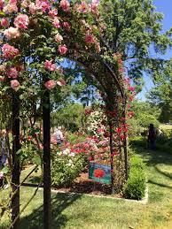 Rose Trellises Stolen Mckinley Park Rose Garden Trellis Found In Backyard Of