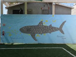 how far would you go to see a whale shark in real life dive o how far would you go to see a whale shark in real life muralwhaleshark