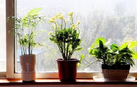 low light plants for bedroom plants in bedroom feng shui bedroom