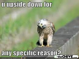 Baby Animal Memes - funny photos funny bird photos cute baby animals photos