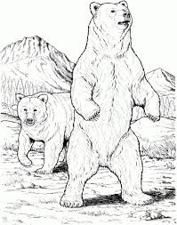 realistic bear drawing realistic grizzly bear coloring page free