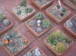 Desert Rock Garden Ideas Desert Rock Garden Rock Abd Palms Landscape Desert Rock