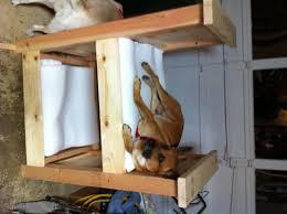 Bunk Bed For Dogs Bed Made From Pallets Korrectkritterscom