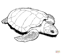 turtles coloring pages in turtle coloring page eson me