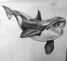 killer whale drawings 1a320848c3993045c9ace8120bc86105 jpg