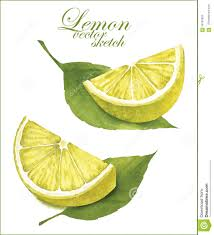 how to draw lime fruits kabar bola terbaru vroh