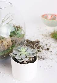 diy succulent terrariums u2013 afloral com
