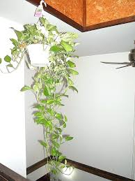 home decor with plants home decor plant ating home decor plants saramonikaphotoblog
