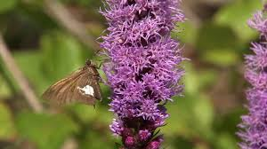 how to attract butterflies to your garden at home with p allen