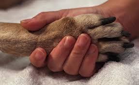 pet euthanasia home euthanasia the pros and cons animal center new