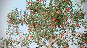 100 fruit tree lyrics biography debra manskey jean kazez