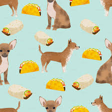 cute scarecrow wallpaper chihuahua food taco dog dogs pet dog cute chihuahua fabric with