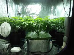 how much does electricity cost for growing cannabis indoors