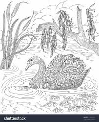 water lily coloring page draw8 info