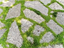 Cover Concrete With Pavers by Concrete Pavers With Dward Mondo Grasses Ground Cover Plants