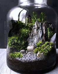 large terrarium adastra