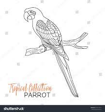 parrot tropical bird vector illustration coloring stock vector