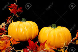 fall pumpkins background pictures two bright orange pumpkins arranged against a black background