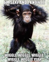 Sexy Monkey Meme - monkey humor i m sexy and i know it wiggle wiggle wiggle wiggle