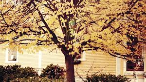 Why Fall Is The Best Season Top 10 Reasons Why Autumn Is The Best Season The Weather Channel