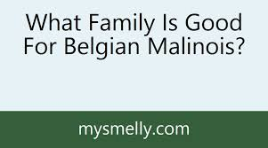 belgian sheepdog what s good about em what family is good for belgian malinois