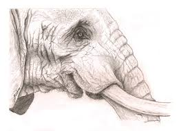 image gallery elephant sketches