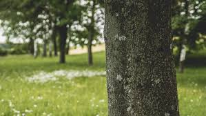 free stock photos of tree trunk pexels