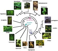 the role of phylogenetics in comparative genetics plant physiology