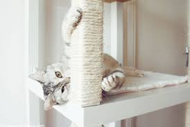 ultimate top 7 best cat tree reviews pawsome