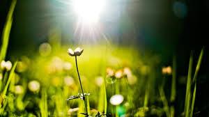 sunlight l for plants nature grass plants bokeh sunlight sunny wallpaper 121808