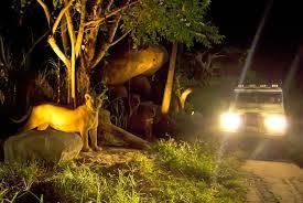 safari night safari bali safari marine park