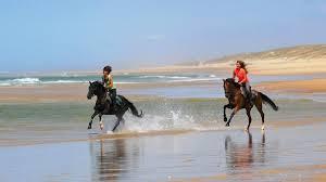 chambre d hote equitation chambres d hôtes à mimizan pour cavaliers et chevaux location