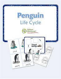 free printable life cycle of a penguin trillium montessori
