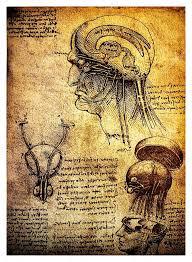 Leonardo Da Vinci Human Anatomy Drawings Ancient Anatomical Drawings By Leonardo Davinci U2014 Stock Photo