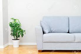 plantes chambre canapé gris et plantes vertes intérieur de la chambre banque d