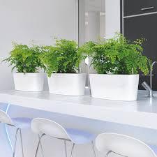 Hochglanz K He Innenraumbegrünung Raumbegrünung Begrünte Räume Pflanzenpflege