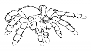 Spider Color Pages Spider Coloring Pages Printable For Kids Halloween Spiders Animal by Spider Color Pages