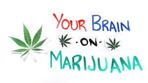 your brain on drugs marijuana youtube