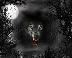 halloween wolves pics free wallpapers wolf in the moonlight