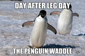 Meme Penguin - 24 memes that prove penguins are the funniest animals on earth