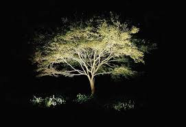 Outdoor Up Lighting For Trees Uplighting Trees Led Unique Design Tree Uplighting Picturesque Led
