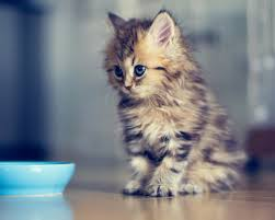 cute halloween kitten wallpaper cute kitten i love this one click to see more like this cute
