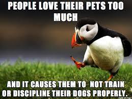 Annoyed Dog Meme - i ve become fed up with annoying dogs meme on imgur