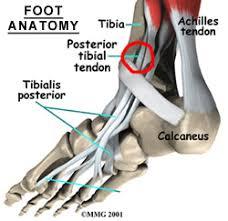 Foot Tendons Anatomy Foot Tendonitis Information U0026 Treatment Advice Itendonitis Com