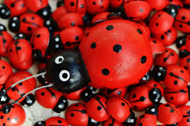 free images wood cute red insect ladybug close ladybird