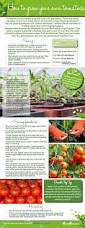 180 best grow your own food images on pinterest vegetables